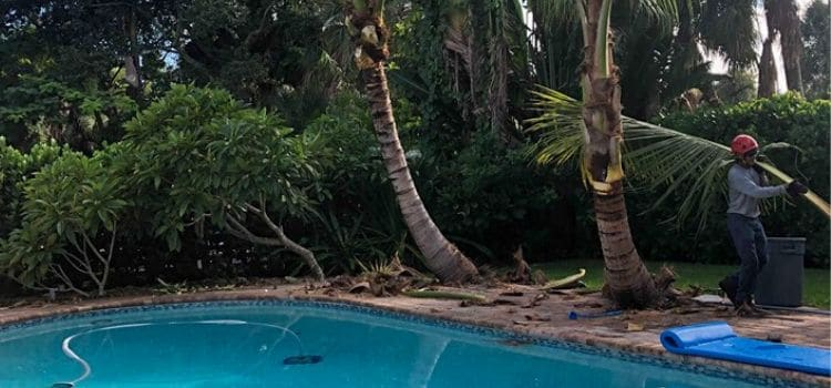 A Leo Garden Care employee hauling away fallen branches after trimming palm trees surrounding a pool.