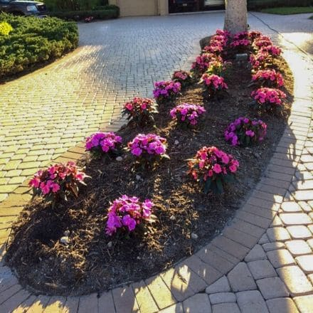 A flower bed where Leo Garden Care has planted beautiful purple flowers.