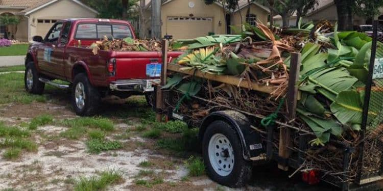 A truck hauling away a trailer full of clippings and palm fronds from a trimming service.