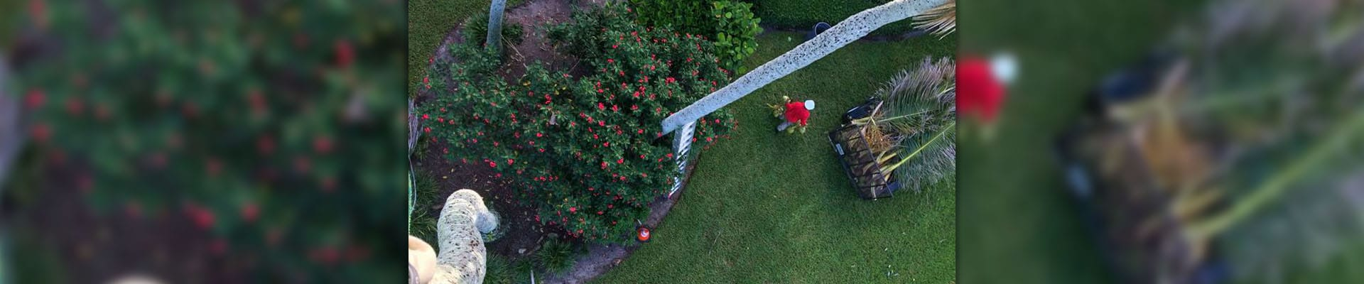 A overhead view of a Leo Garden Care employee walking across a lawn during a visit.