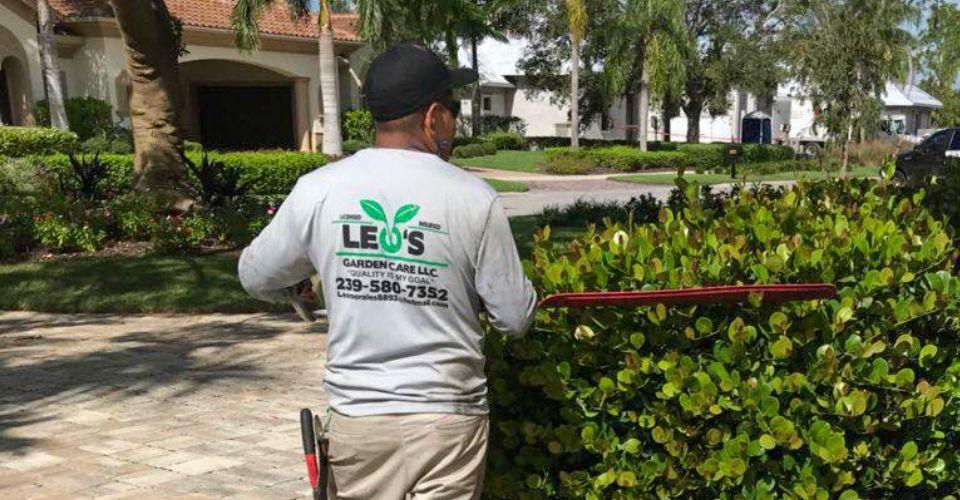 Bush Pruning