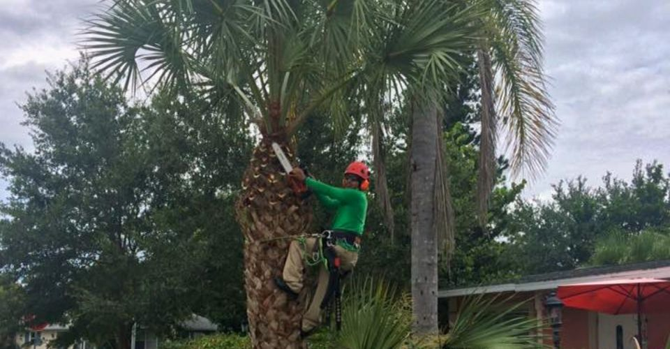 Tree Pruning Service Near Me